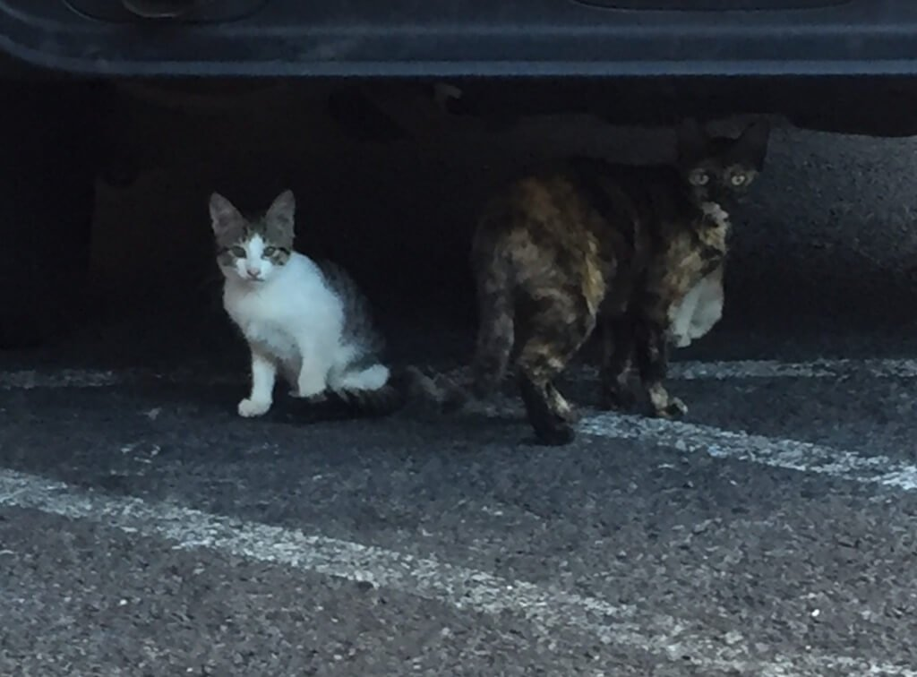 These are homeless kitties that I will not be able to bring home...sigh